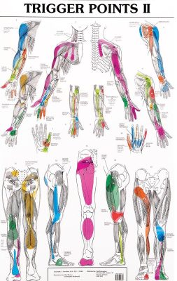 trigger-points-chart-massage-therapy